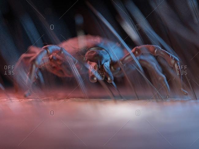 3d rendered illustration of a tick on human skin.