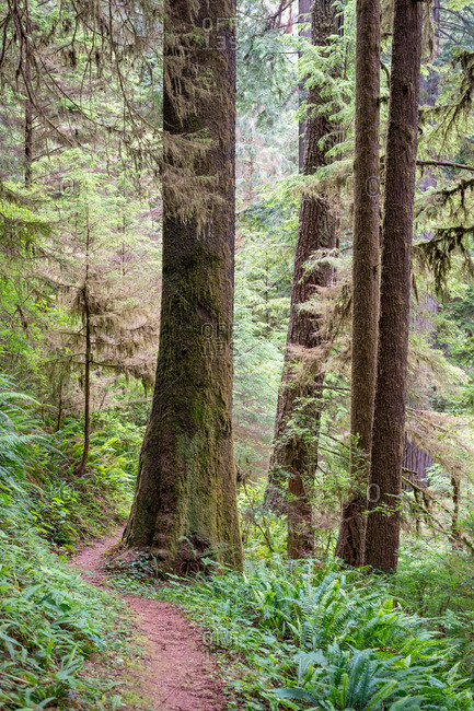 Small path through Redwood National and State Park