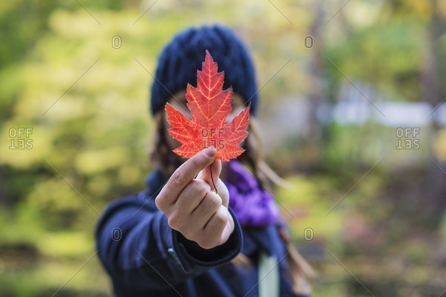 Solo woman traveller holding up maple leaf during autumn, Montreal, Quebec, Canada