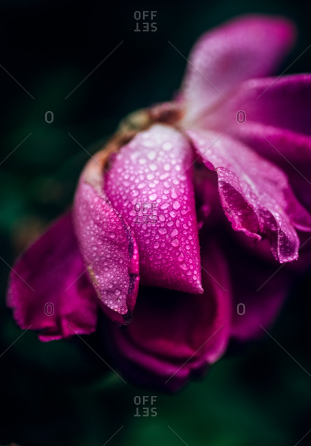 Macro view of a wild flower