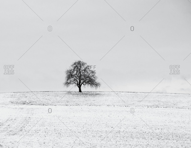 Wide view of a snow covered field with one tree