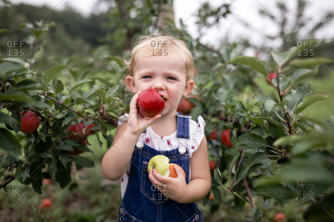 Portrait of cute girl eating apple while standing against fruit trees