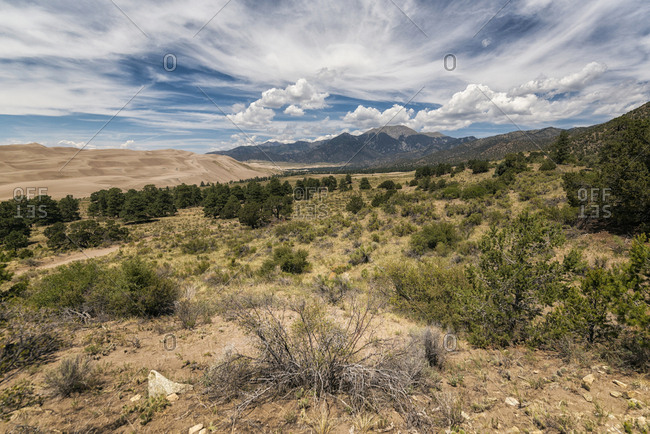 Scenic view of plants on desert against cloudy sky at Great Sand Dunes National Park