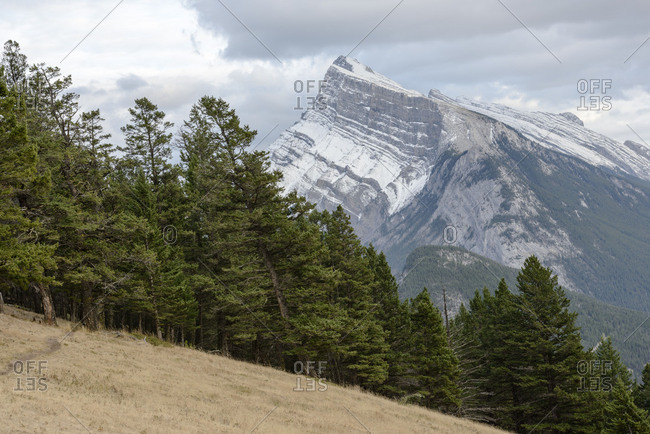 Banff National Park, forest, mountain, layers, geology, slope