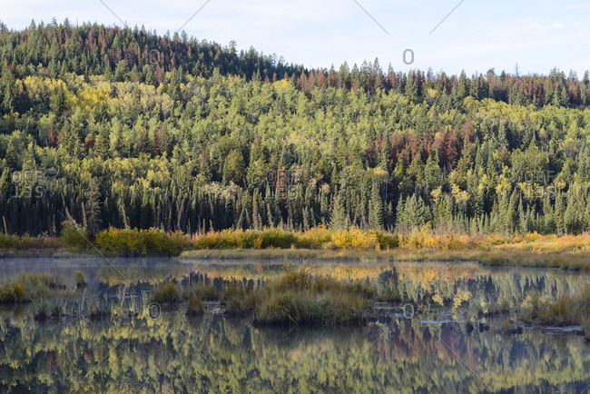 Alberta, Patricia Lake, Jasper National Park, autumn, fall, color, colorful, impressive, forest, trees, reflection, red, yellow, green, blue