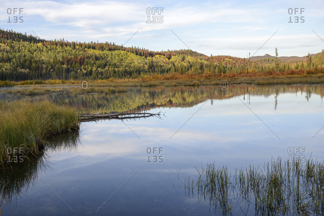 Alberta, Patricia Lake, Jasper National Park, autumn, fall, color, colorful, forest, trees, reflection, red, yellow, green, blue