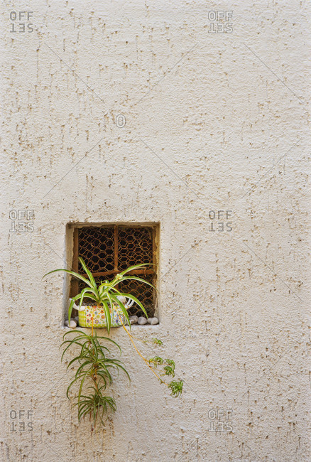 Croatia- June 28, 2018: Croatia, Kvarner Bay, Krk Island, Baska, old town, Facade, Detail, Window, Plant