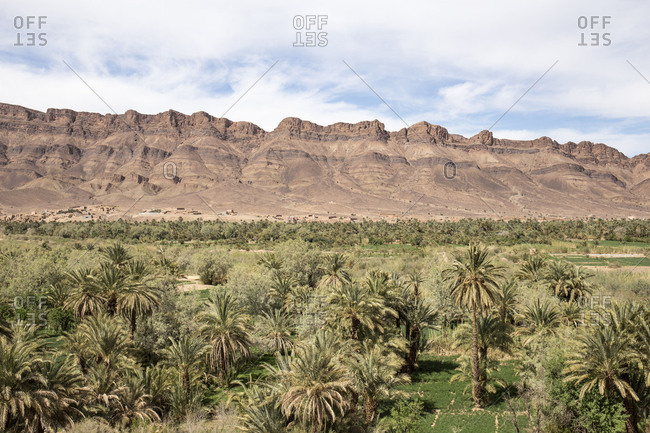 Morocco, Tizi n'Tinififft, travel route along road N9, palm grove