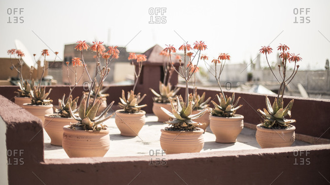 Morocco - May 30, 2018: Morocco, Marrakech, flowerpots on a roof terrace
