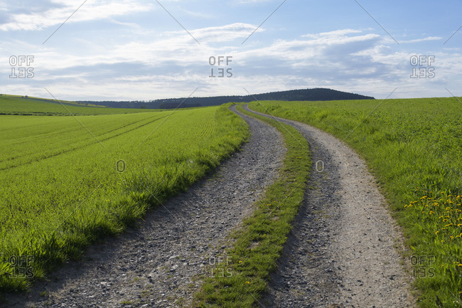 Countryside with path in spring, Reicholzheim, Wertheim, Taubertal, Tauberfranken, Main-Tauber-district, Baden-W�rttemberg, Germany