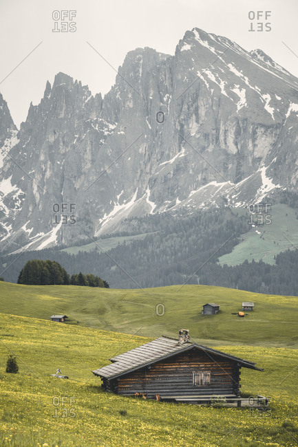 Europe, Italy, Bolzano, South Tyrol, Alpe di Siusi - Seiser Alm, Dolomites, the group of sassolungo  /  langkofel as seen from Alpe di Siusi  /  Seiser alm in spring
