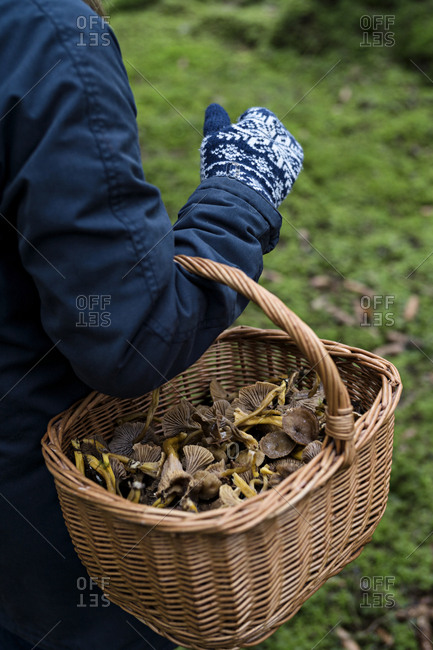 Person with mushrooms in basket