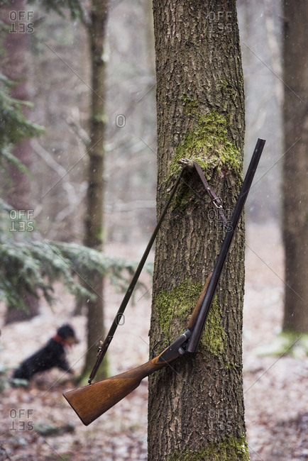 Riffle hanging on tree