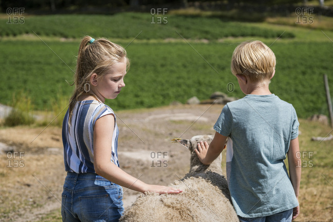 Children stroking sheep