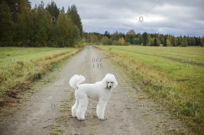Dog standing on dirt track