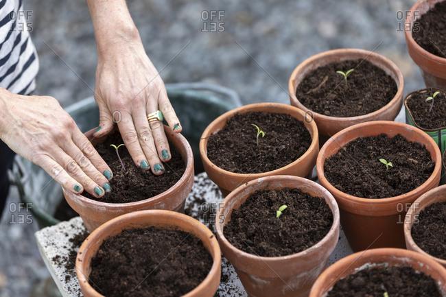 Woman planting seedlings