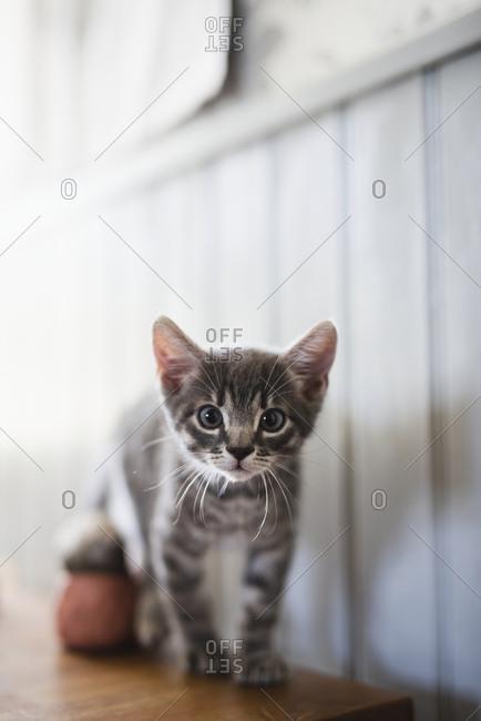 Small kitten on table
