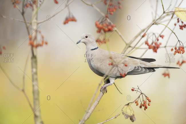 Dove perched on a tree branch