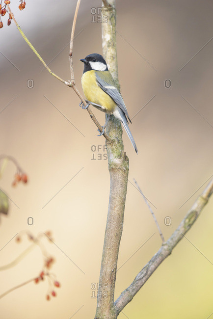 Songbird perched on a tree branch