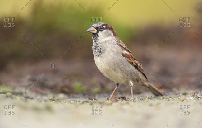 Small songbird standing on the ground