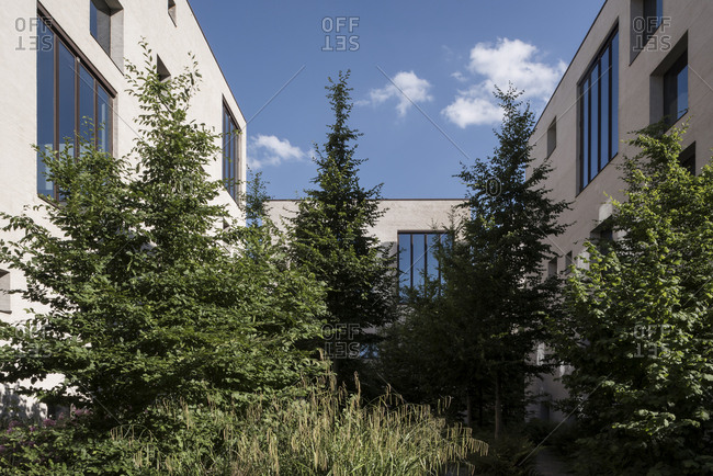 Trees and green plants in courtyard of modern housing project