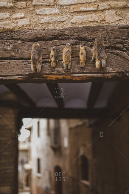 Spain- Alquezar- animal hoofs nailed at a wall