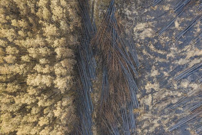 Germany- Brandenburg- Treuenbrietzen- Forest- Aerial view of slash and burn
