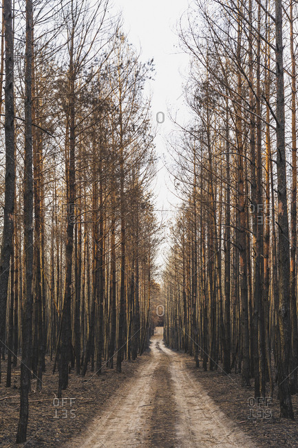 Germany- Brandenburg- Treuenbrietzen- Forest- slash and burn- empty forest road