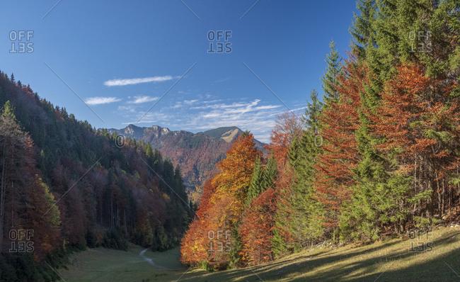 Germany- Upper Bavaria- Aschau- forest in autumn