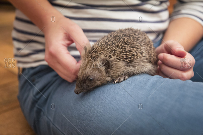 Woman with hedgehog on her thigh- close-up