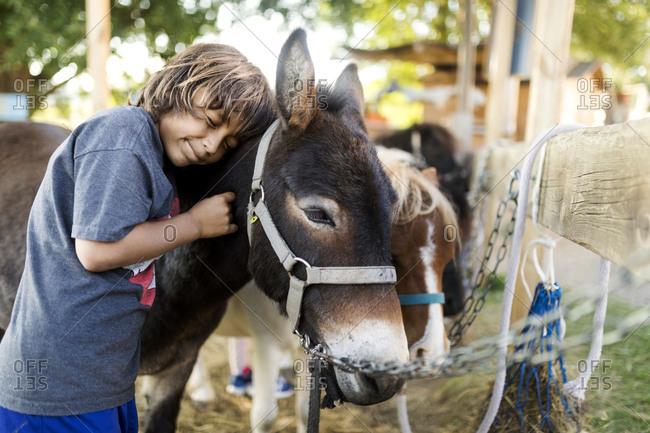 Boy stroking mule
