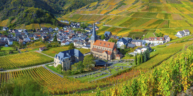 Germany- Rhineland-Palatinate- Eifel- Ahr Valley- Mayschoss- Vineyard in autumn