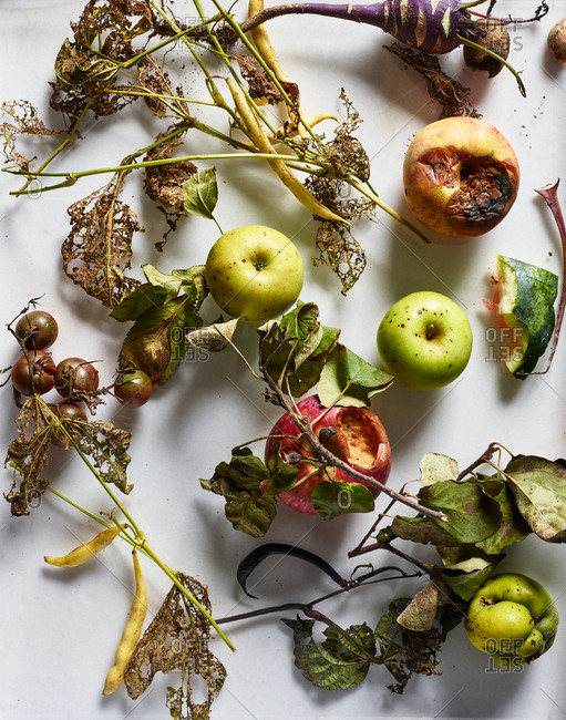 Rotten fruit and vegetables on white background