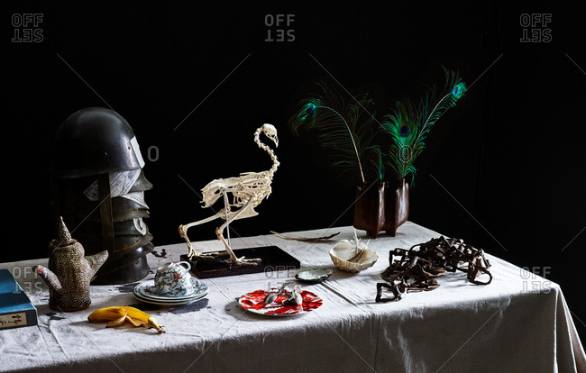 Bird skeleton and other objects on a table