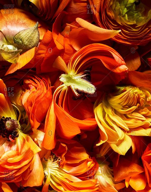 Detail of orange peonies