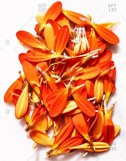 Orange flower petals on white background
