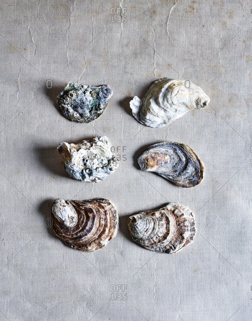 Shells on gray background