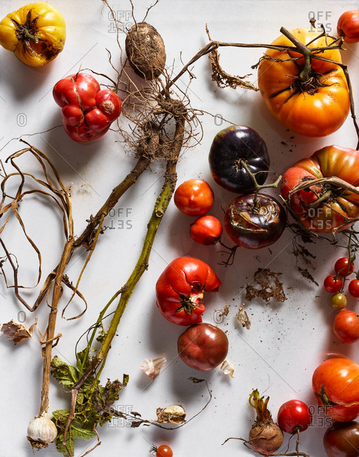 Heirloom tomatoes on white background