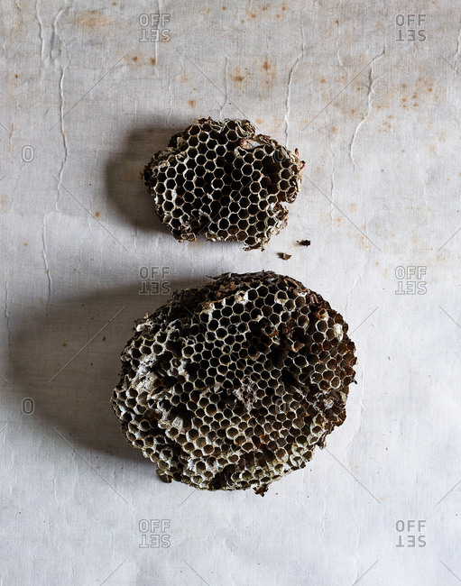 Empty pieces of wasp nest