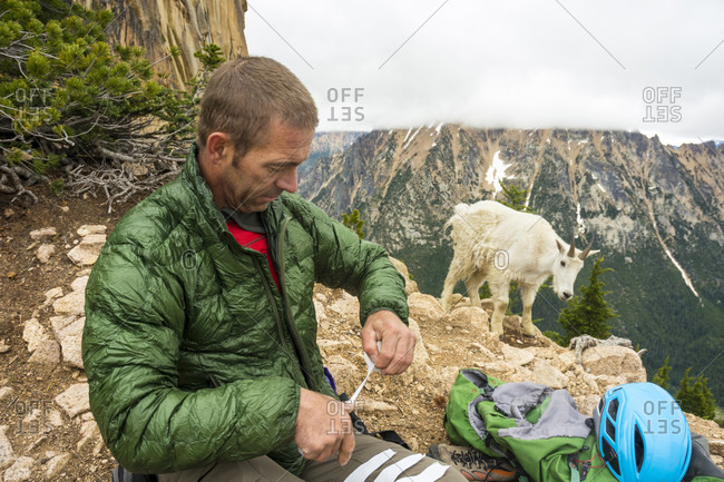 A man taping his hands before rock climbing next to a curious mountain goat below the South Early Winter Spire, North Cascades National Park, Mazama, Washington