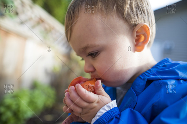 Side view of a baby boy eating a fresh tomato from a backyard vegetable garden