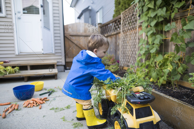Young boy uses his toy dump truck to clear away clippings from the garden
