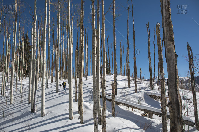 Distant view shot of a person going backcountry skiing, Marble, Colorado, USA