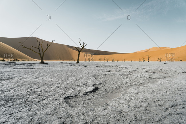 Dead ancient trees in gray���Deadvlei���clay pan, Namibia