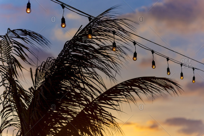 Row of string lights glowing dimly over palm tree���and sky at dusk, Changgu, Bali, Indonesia