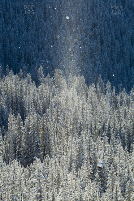 Ray of sunlight illuminating ice crystals suspended over snow-covered coniferous forest, Colorado, USA