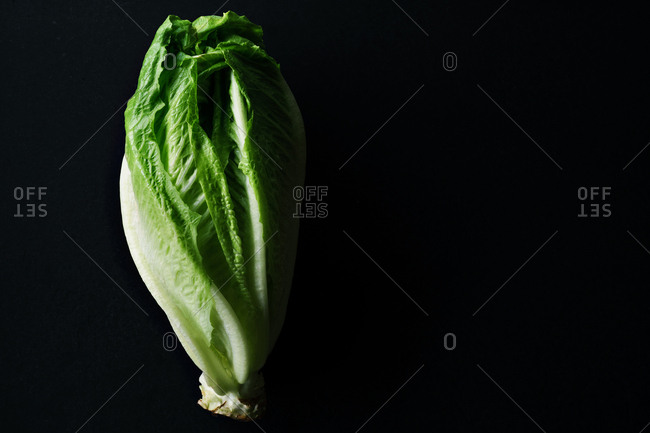 Close up image of romaine salad