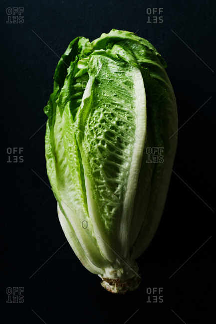 Close up of a head of romaine lettuce