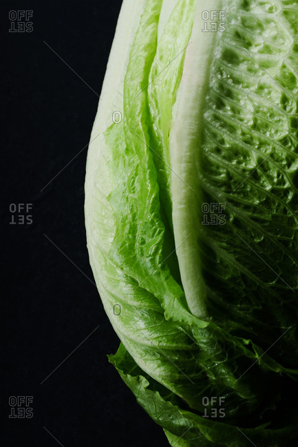 Close up image of romaine lettuce