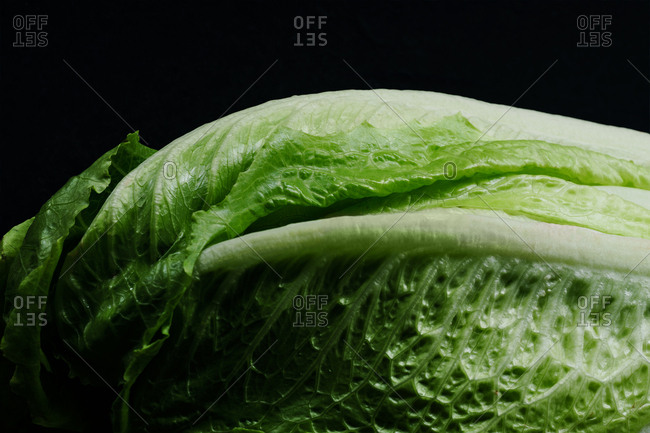 Close up detail of romaine lettuce